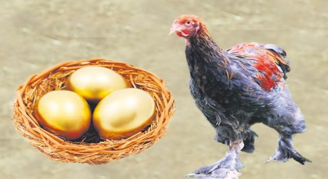 Tavuklar Altın Yumurtlamaya Başladı