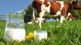 Süt Üretimi Arttı Ama…